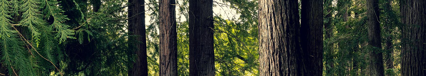 Trabajos y proyectos como empresa líder en innovación de madera
