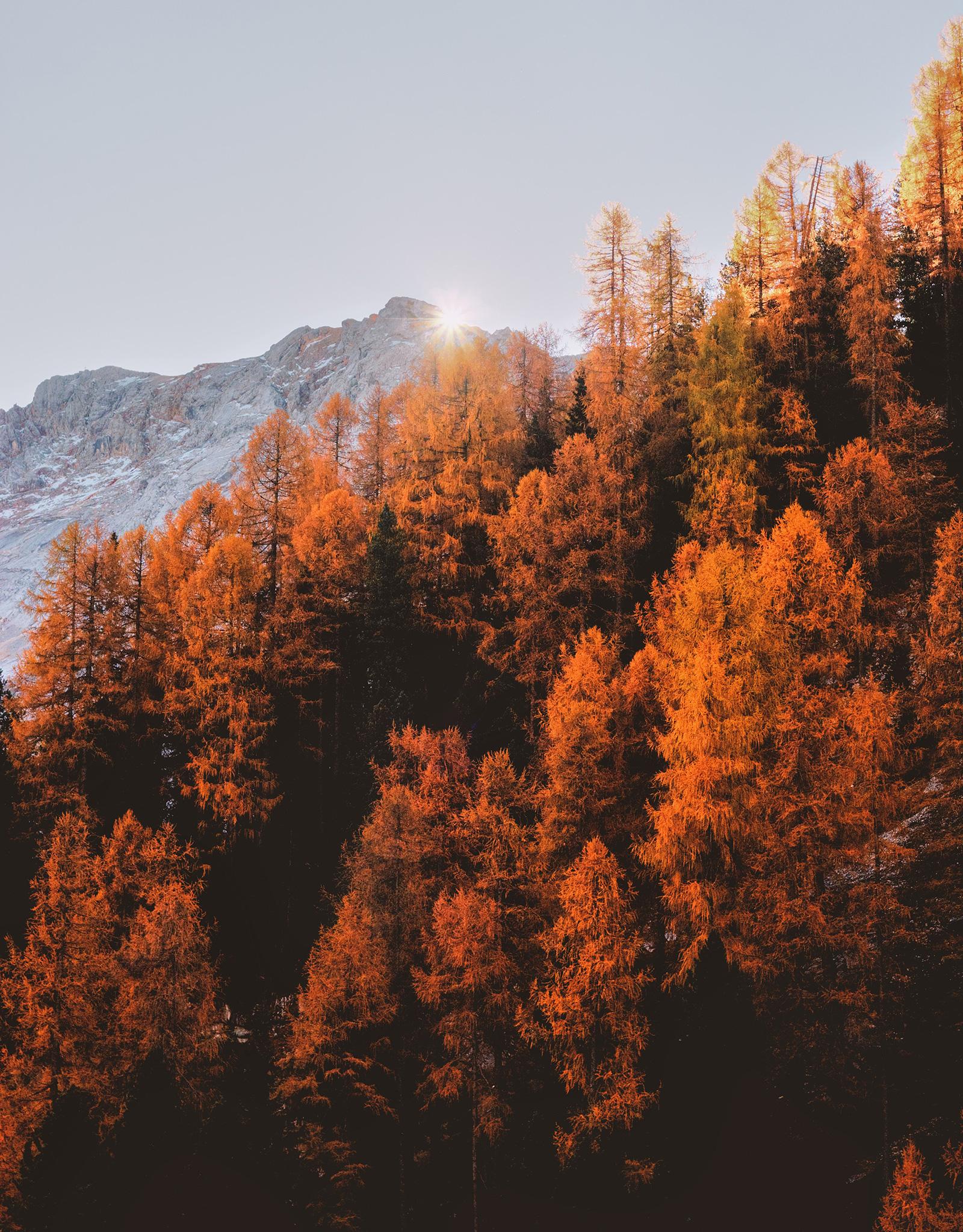 Empresas de maderas certificadas, Certificación forestal, Empresas con certificación de madera